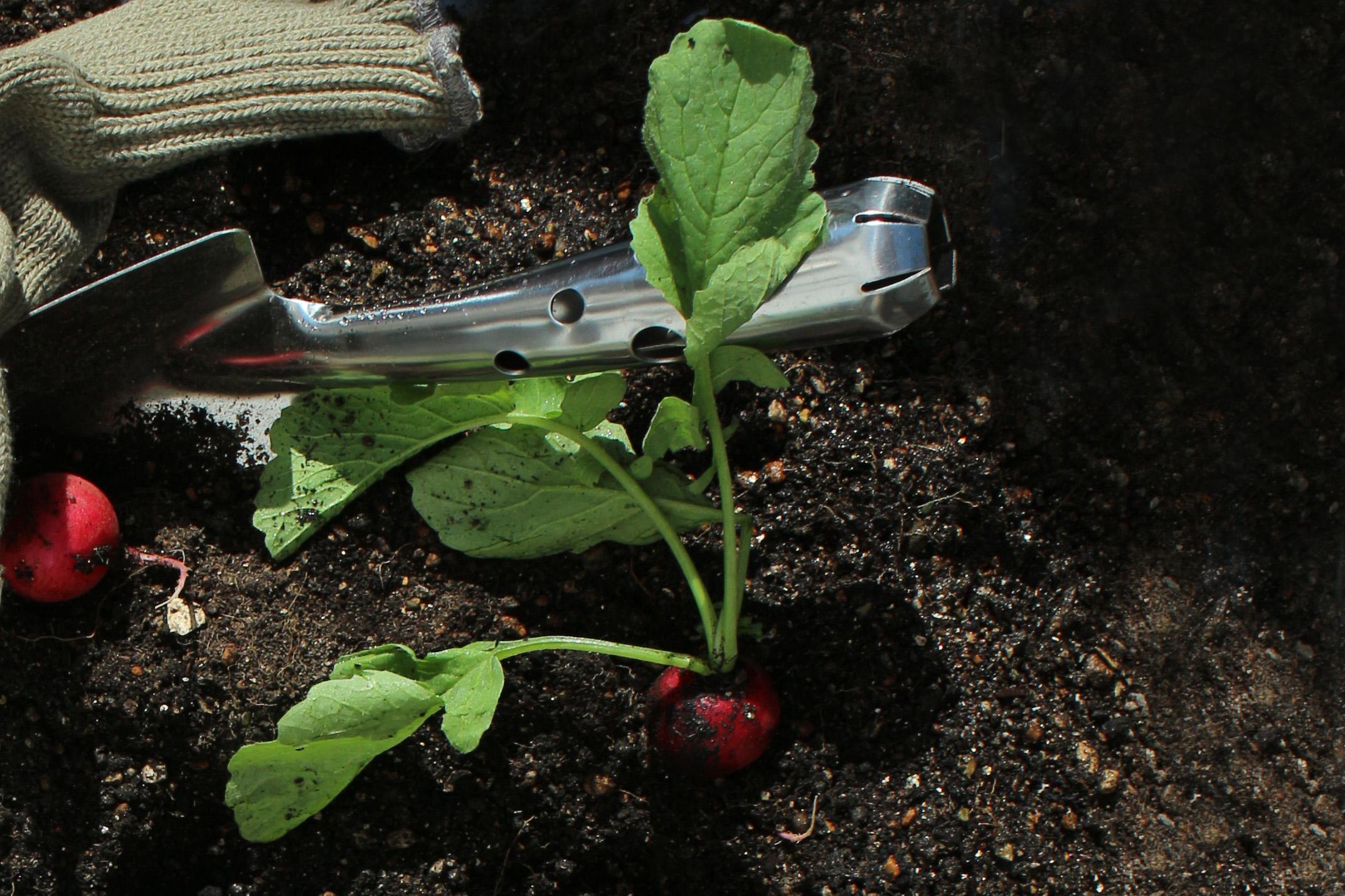 植える、育てる、食べる